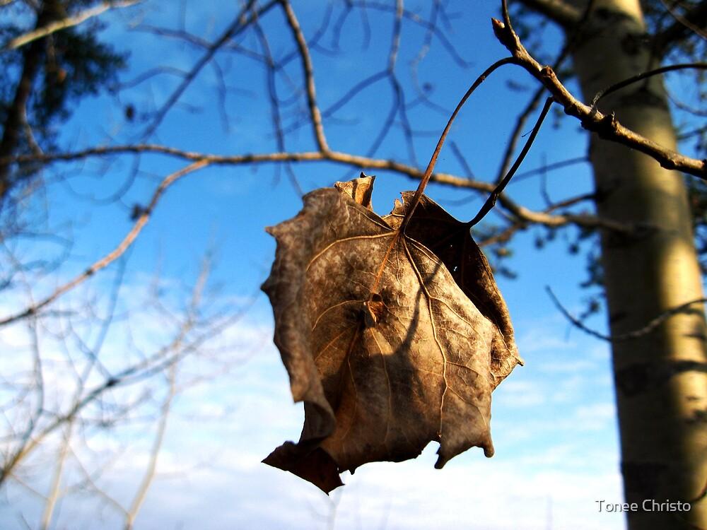 Fall Beauty by Tonee Christo