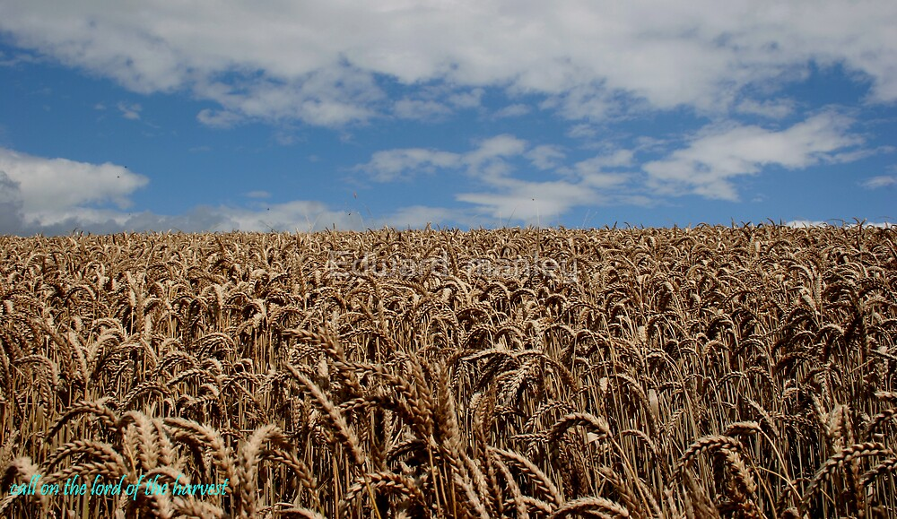 harvest by Edward  manley