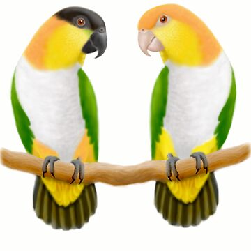 Caique Parrot Love by twopurringcats