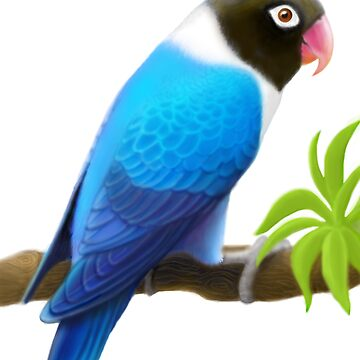 Masked Lovebird Blue by twopurringcats