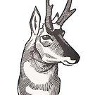 Antelope by Maranda Cromwell