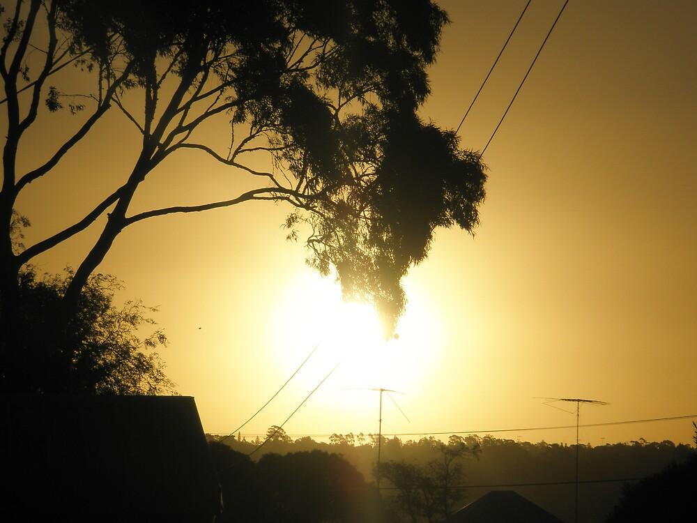 Golden Glare by Melissa Park