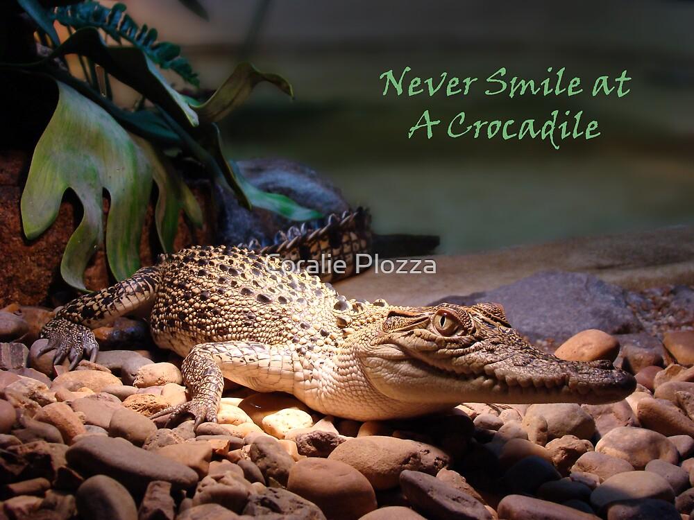 Crocadile - Naturaliste Reptile Park Carbunup W.A, by Coralie Plozza
