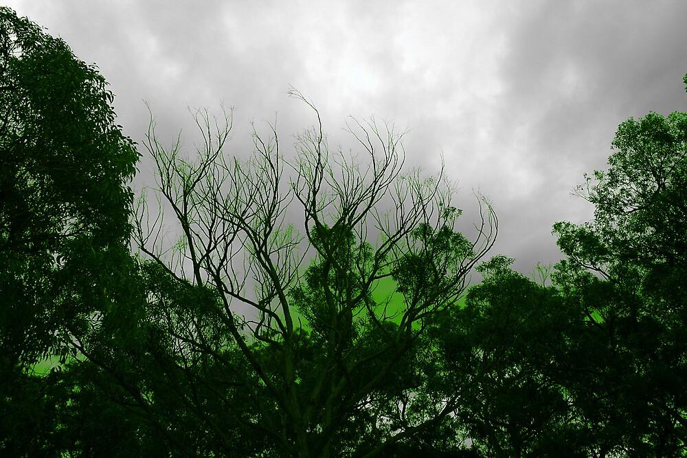 Radio active trees by Matthew  Smith