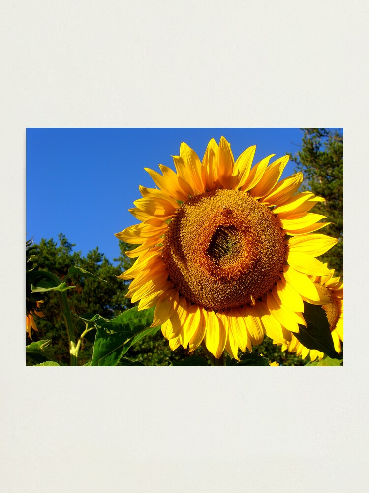 Alternate view of Keep Your Face to the Sun Photographic Print