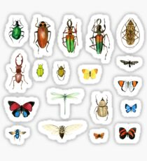 The Usual Suspects - Insects on grey - watercolour bugs pattern by Cecca Designs Sticker