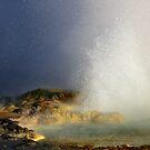 Yellowstone National Park by Julene Mendenhall
