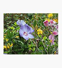 The Earth Laughs In Flowers Photographic Print