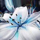 RARE BLUE HEART LILY  by WhiteDove Studio kj gordon