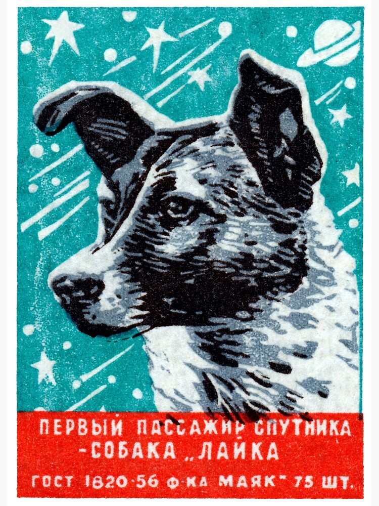 1957 Laika the Space Dog by historicimage
