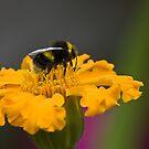 Buzzing around by Steve plowman