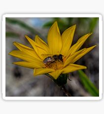Yellow flower and bee - springtime Sticker