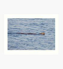 Swimming Otter Art Print
