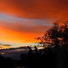 Sunset Orange by GailD