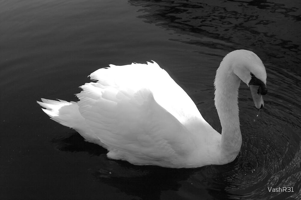 B/W Swan by VashR31