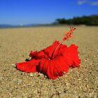 Flower focus by VashR31
