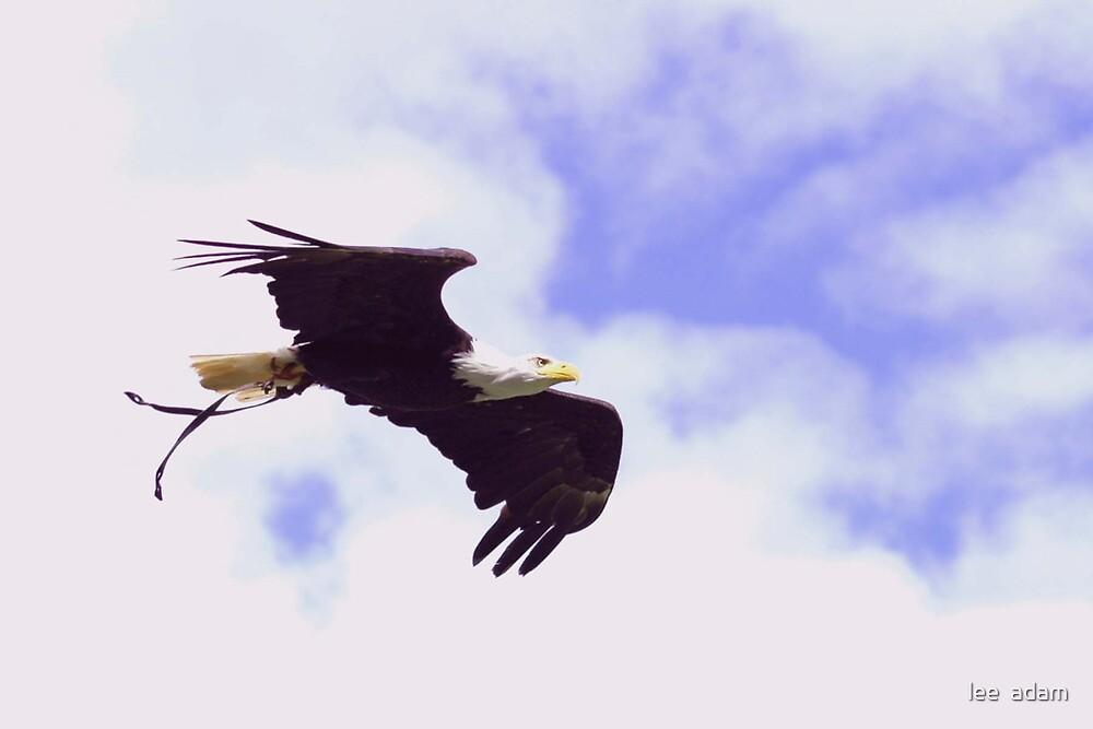 In flight by lee  adam