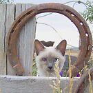 horse shoe cat by conilouz