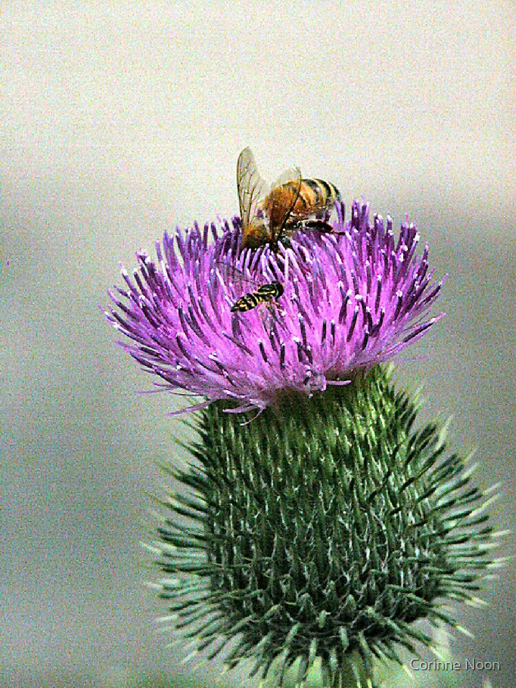 Thistle N Company by Corinne Noon