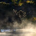 Foggy Morning by Valentina Gatewood