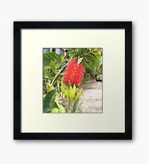 """ Bottle brush. "" Framed Print"