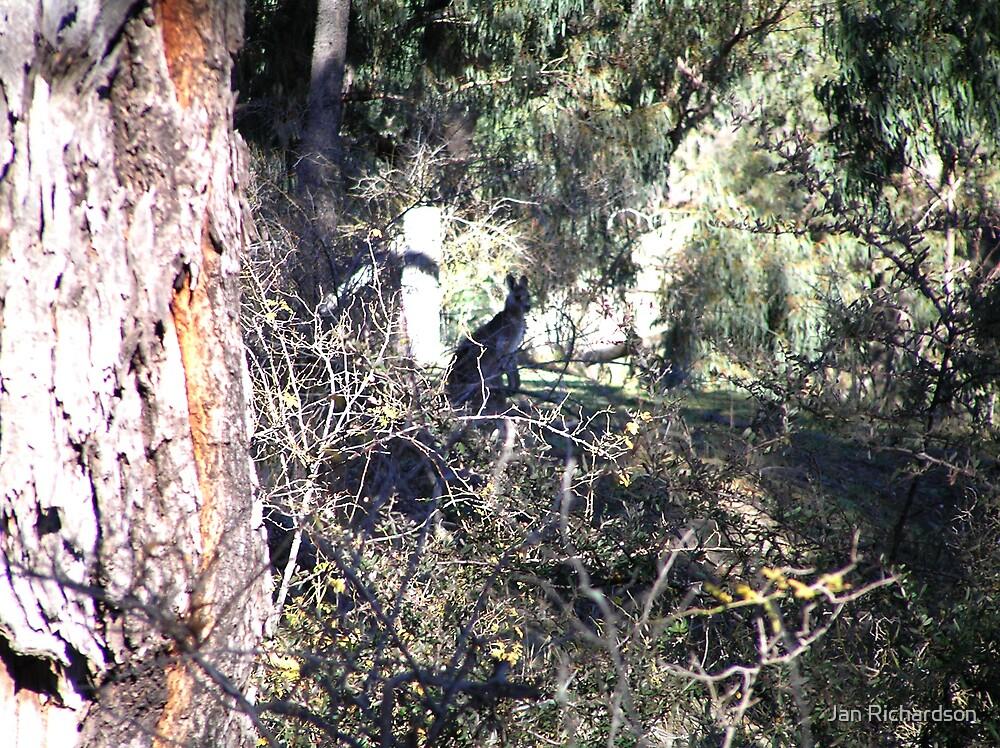 Wallaby for Bev Woodman by Jan Richardson