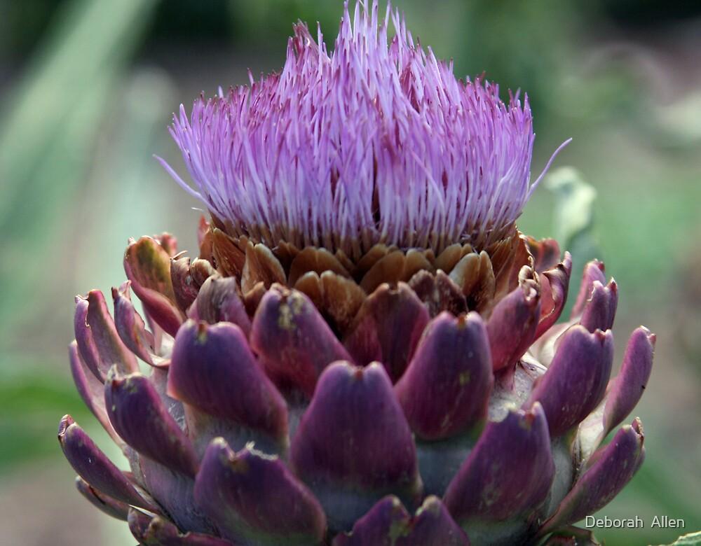 Artichoke Gone to Seed by Deborah  Allen