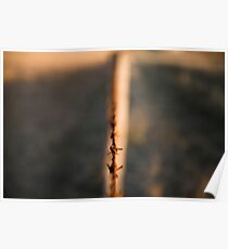 Rusted sharp timber and metal barb wire fence. Poster