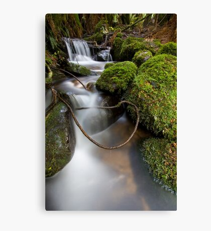 Lasso at Cement Creek Canvas Print