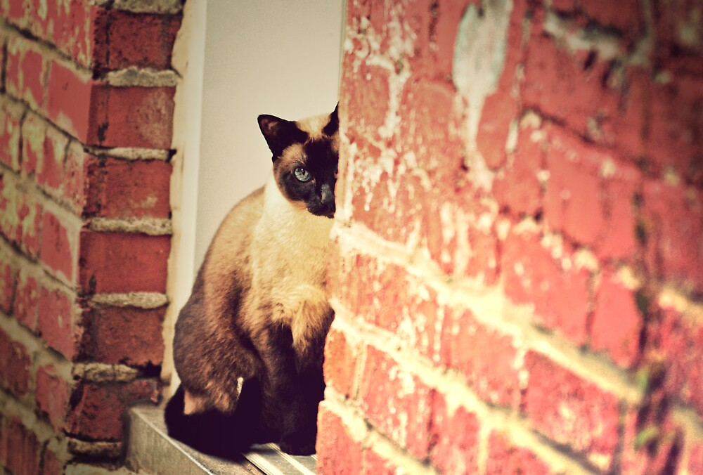 Peeking by Idil