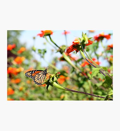 Butterfly Garden Photographic Print