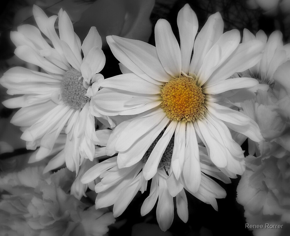 Daisy Wonderful by Renee Rorrer