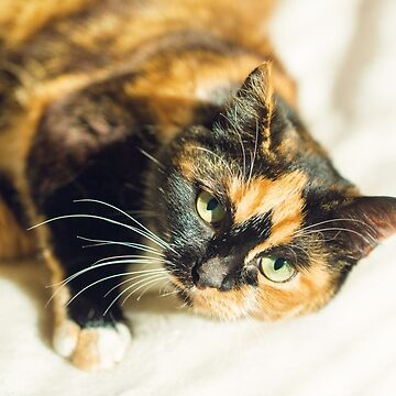 Beautiful varicolored young cat, home animal by nanti