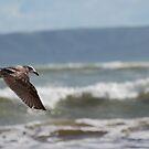 Seagull in Flight by Barbara Caffell