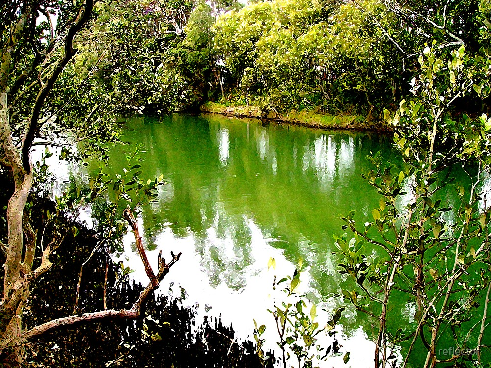 Mangrove Waterway by reflector