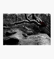 Healing Streams II Photographic Print