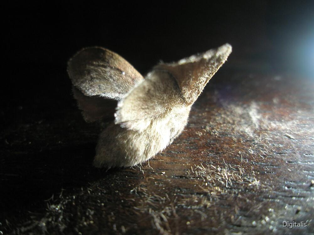 little Moth by Digitalis