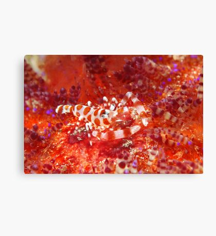 Baptism Of Fire Canvas Print