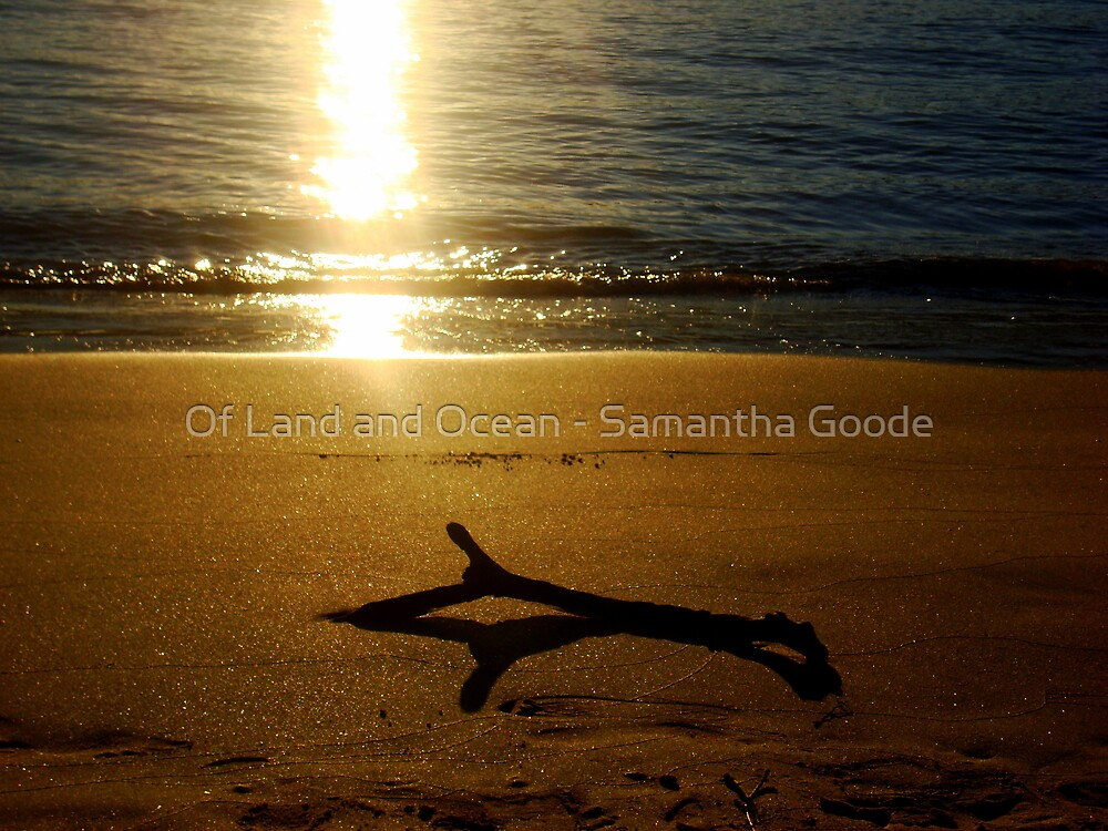 Driftwood  by Of Land & Ocean - Samantha Goode