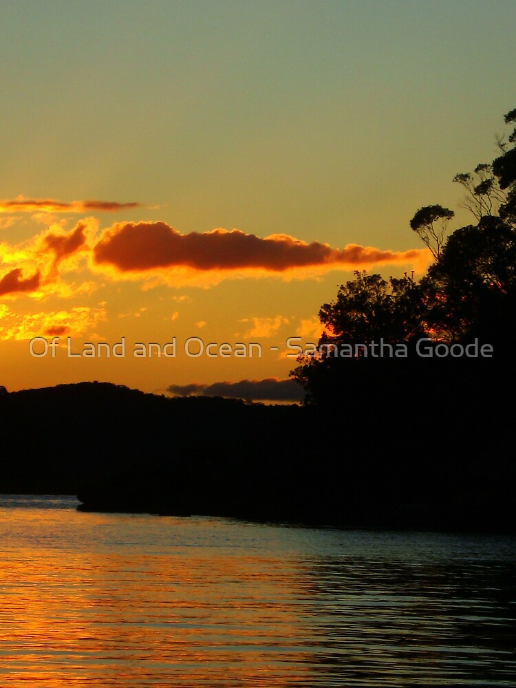 Black trees and sunlight by Of Land & Ocean - Samantha Goode