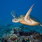 Icon of the Reef by aabzimaging