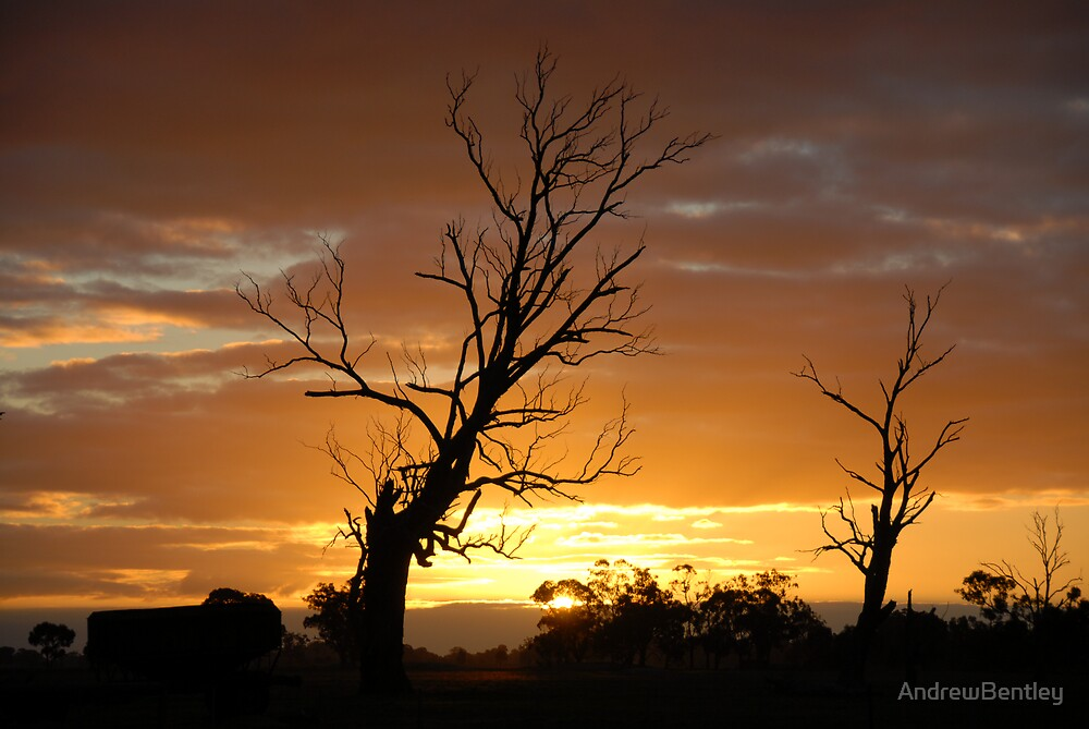 Sunset trees by AndrewBentley