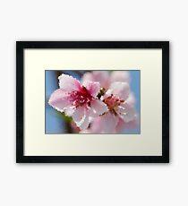 peach blossom in spring Framed Print