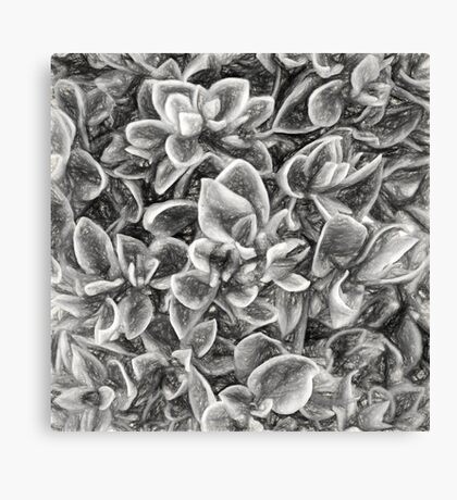 Succulent in Charcoal Canvas Print