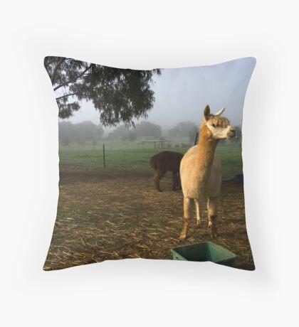 Boddington and alpacas Throw Pillow