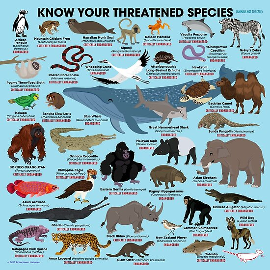 """""""Know Your Threatened Species"""" Posters By PepomintNarwhal"""