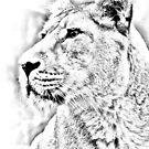 Lioness Portrait by Andy Beattie