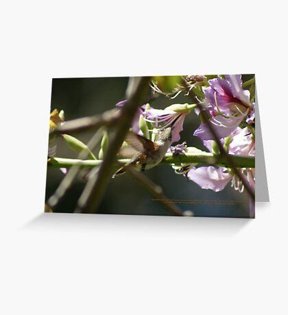 Sweetness of Spring; Hummingbird; Neff Park, La Mirada, CA USA Greeting Card