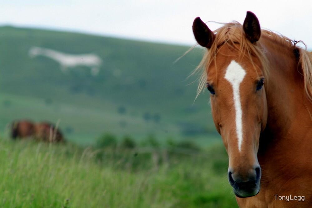 Horse & White Hourse.. by TonyLegg