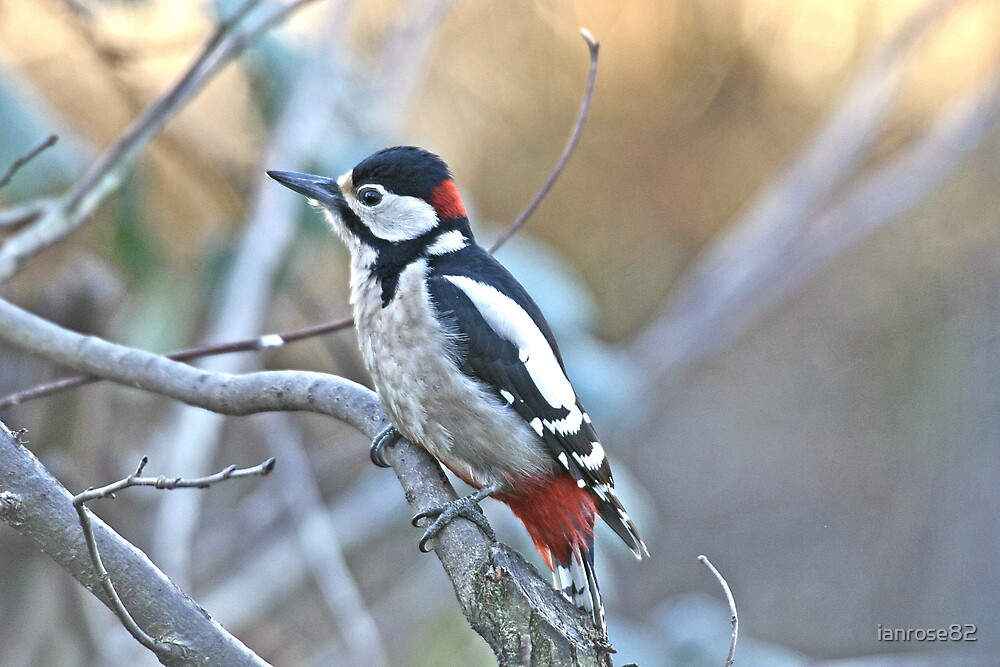 Great Spotted Woodpecker by ianrose82